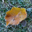 Frosted autumn leaf — Stock Photo