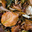 Autumn leafage — Stockfoto #7573797