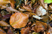 Autumn leafage — Stock Photo