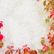 Red creeper plant on wall — Stock Photo