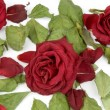 Red rose petals, buds and green leaves — Stock Photo