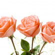 Three Roses — Stock Photo