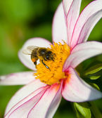 Pollination — Stock Photo