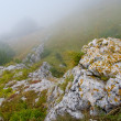 Misty morning — Stock Photo