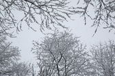 Snow and Trees — Stock Photo