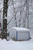 Snow Falling with Trees and Shed — Stock Photo