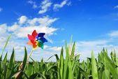 Pinwheel at Corn Field — Stock Photo