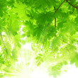 Royalty-Free Stock Photo: Sun beams and green leaves