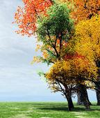 Wonderful autumn scenery — Stock Photo