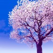 Stock Photo: Blossoming cherry-tree