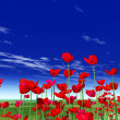 Summer flowers. Poppies - Stock Photo