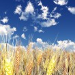 Wheat field — Stock Photo #6843385