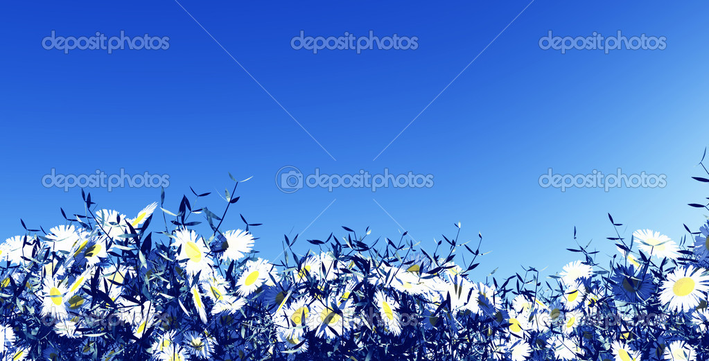 Summer flowers — Stock Photo #6842755