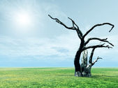 Scenery with dead tree — Stock Photo