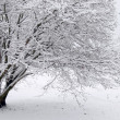 white winter — Stock Photo