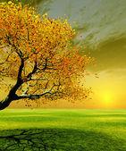 Höstens scen — Stockfoto