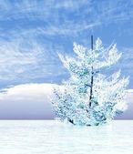 Bílá zimní — Stock fotografie