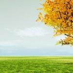 Autumn scene — Stock Photo #7025803