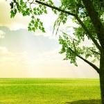 paisagens de Primavera linda — Foto Stock