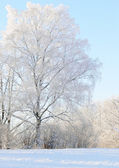 Winter scenery — Stock Photo