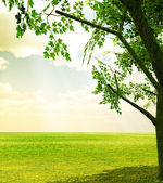 Beautiful spring scenery — Stock Photo