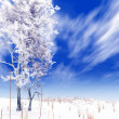 Winter landscape — Stock Photo #7103043
