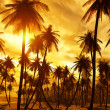 Tropical island — Stock Photo #7276342
