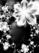 Flores de ensueño — Foto de Stock
