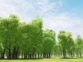 Beautiful landscape — Zdjęcie stockowe