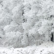 White winter — Stock Photo #7292633
