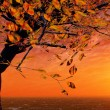 Autumn sunset — Stock Photo