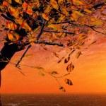 Autumn sunset — Stock Photo