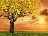 Autumn scenery — Стоковое фото