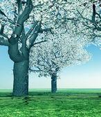 開花桜の木 — ストック写真
