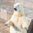 Polar bear — Stock Photo #6752616