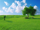Blue sky and grass — Stock Photo