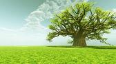 クレムリンのパノラマ令人印象深刻的猴面包树 — 图库照片