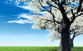 Paisaje de primavera hermosa — Foto de Stock