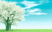 美しい開花ツリー — ストック写真
