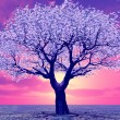 Beautiful tree in the sunset — Stock Photo