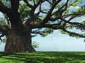 Baobá impressionante — Foto Stock