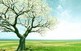 Beautiful blossoming tree — Stock Photo
