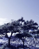 Beautiful winter landscape with trees — Stock Photo