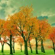beautiful autumn — Stock Photo