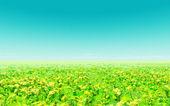 Hermoso campo de flores — Foto de Stock
