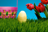 Yellow Easter egg and basket in grass — Stock Photo