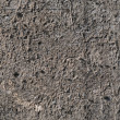 Exposed aggregate concrete — Stockfoto