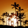 Stock Photo: Coconut Palm Tree Silhouettes