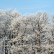 Frost Splendor — Stock Photo