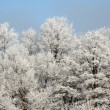 Stock Photo: Frozen Forest